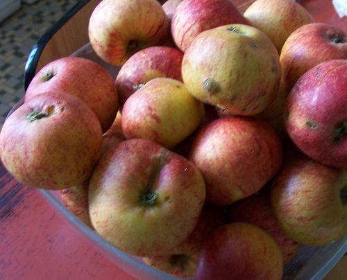 pommes varietés anciennes